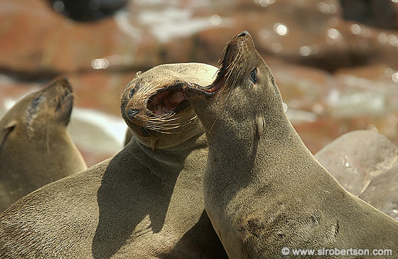 Photo: Cape Seal Argument