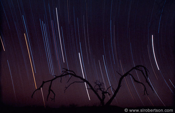 Photo: Okonjima Star Trails