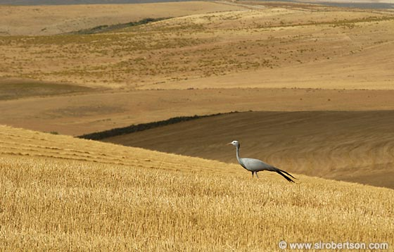 Photo: Overberg Wheat Fields