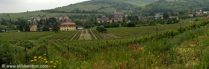 Andlau Vineyard Panorama 1