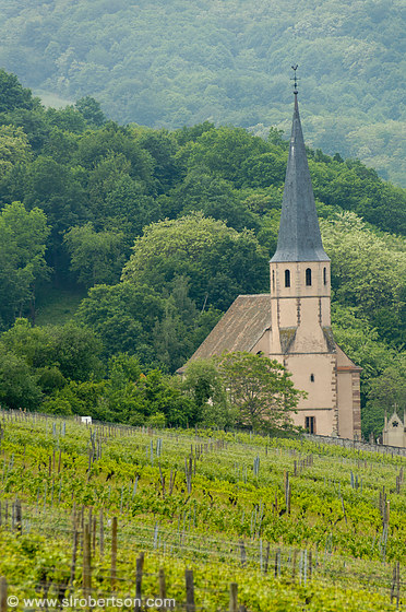 Andlau Vineyard 1