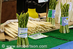 White and Green Asparagus 1