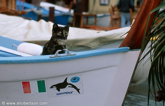 Vernazza Cat 2