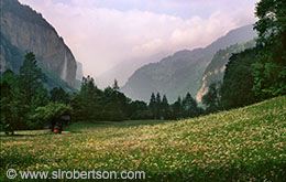Lauterbrunnen Valley wildflowers and hikers