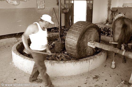 http://www.slrobertson.com/images/mexico/oaxaca-valley/mezcal-grinding-agave-2-bw-b.jpg