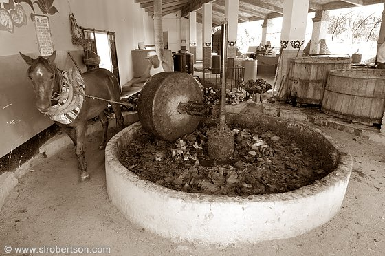 Roasted agave cactus crushed with horse-drawn mill stone during mezcal production