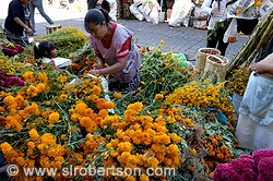 Day of the Dead Flowers for Sale