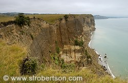 Cape Kidnappers Cliffs #2