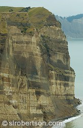 Cape Kidnappers Cliffs #3