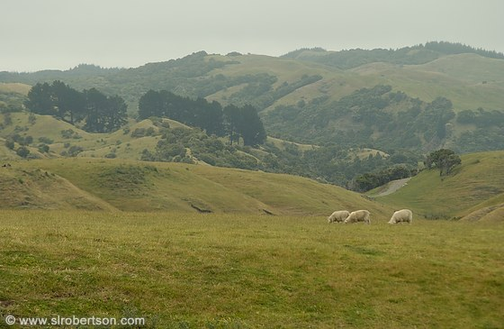 Cape Kidnappers Sheep Station