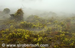 Steamy hillside covered in moss, Craters of the Moon Park