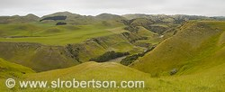 Rolling green hills, sheep farm
