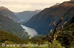 View of Deep Cove on Doubtful Sound from mountain overlook
