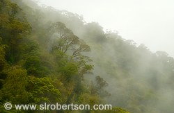Mist and clouds hang low over Doubtful Sound rainforest