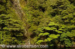 Trees and vegetation cling to steep walls of Doubtful Sound ravine