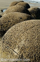 The Moeraki Boulders, a spherical rock formations on East Coast, South Island beach
