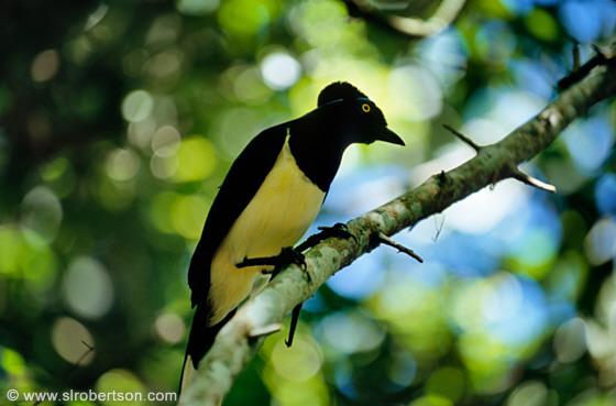 iguazu-bird-b.jpg