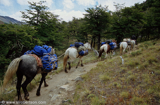 Pack horses with mountaineering and climbing supplies