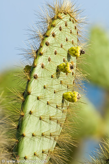 photo of santiago cactus 1 scott l robertson photography