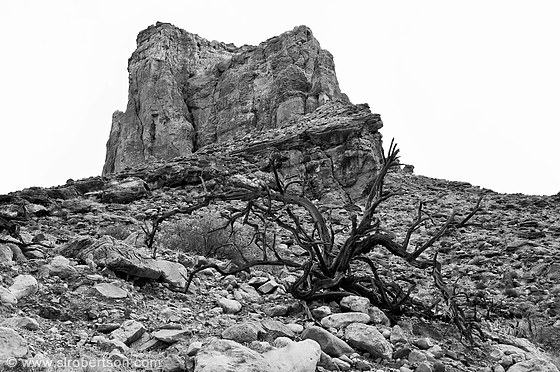 Grand Canyon Dead Tree 3 Bw