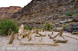 Grand Canyon Driftwood Gallery 2