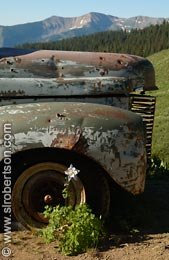 Columbine and Truck Wheel (2) - Click for large image