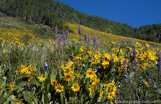 Photo: Brush Creek Wildflowers (2)