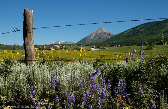 Photo: Field of Lupines and Sunflowers