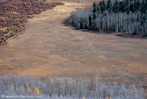 Scrub brush, brown grass and bare aspen trees on valley floor, Boreas Pass