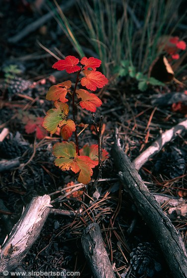 Orange and red foliage on forest floor undergrowth