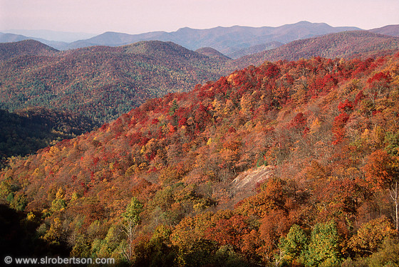 Fall Color (3), Georgia Mountains