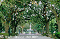 Canopy of Live Oak trees, covered in Spanish Moss, path leading to marble fountain, Forsyth Park, Savannah, Georgia